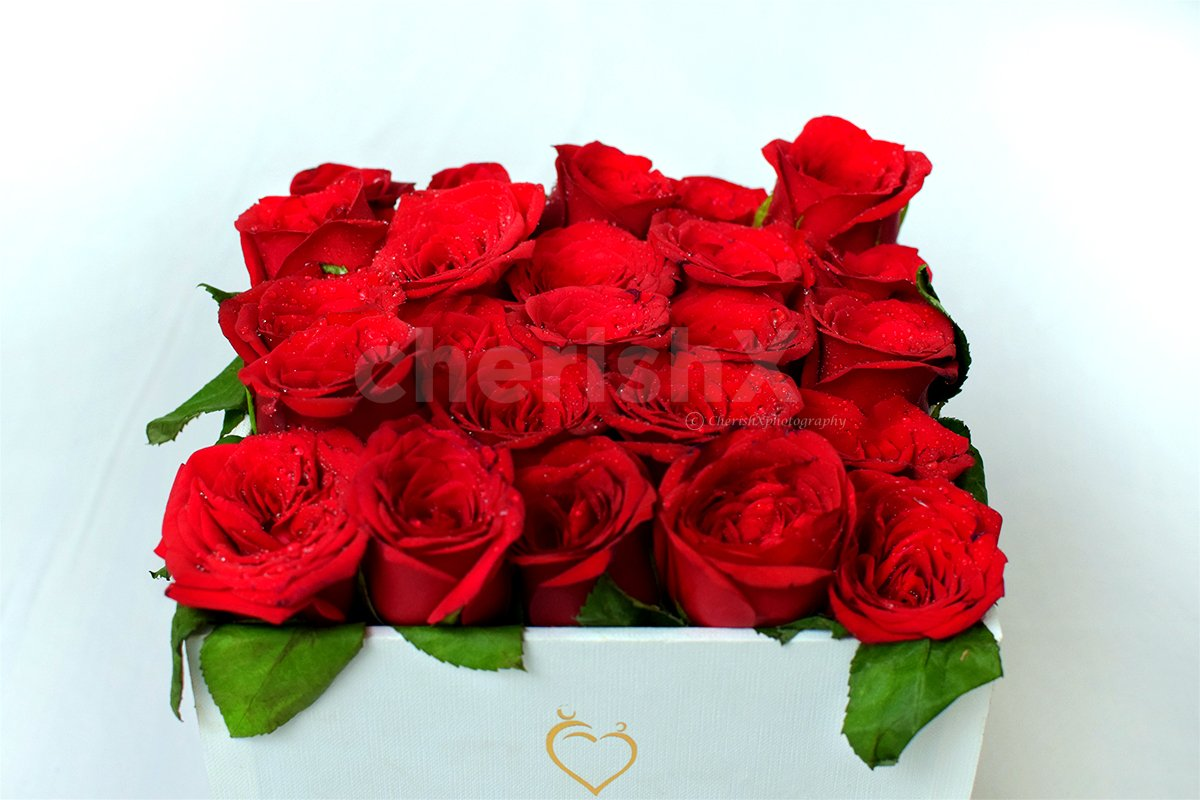 Tinted Rose Bucket