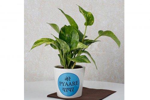 Pyaare Papa Plant