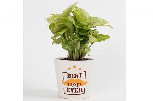 Best Dad Plant