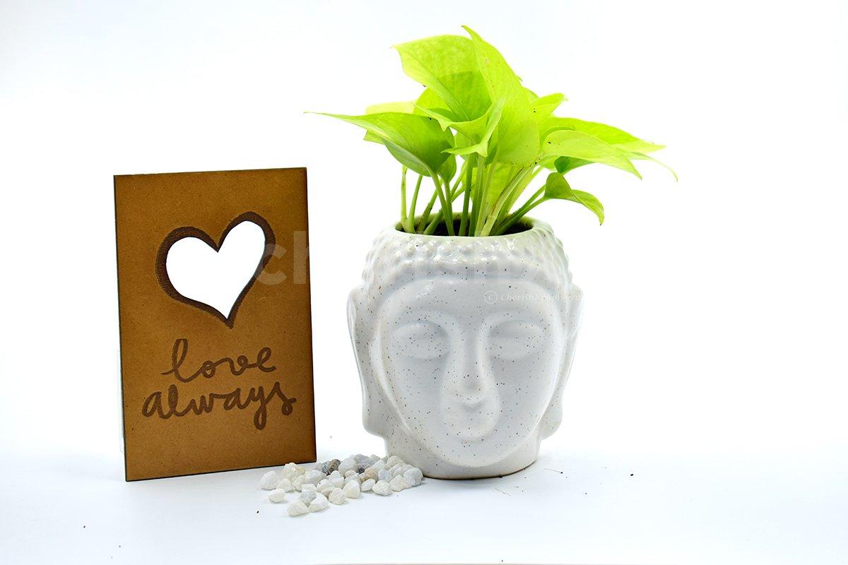 Money Plant In Buddha Head Pot