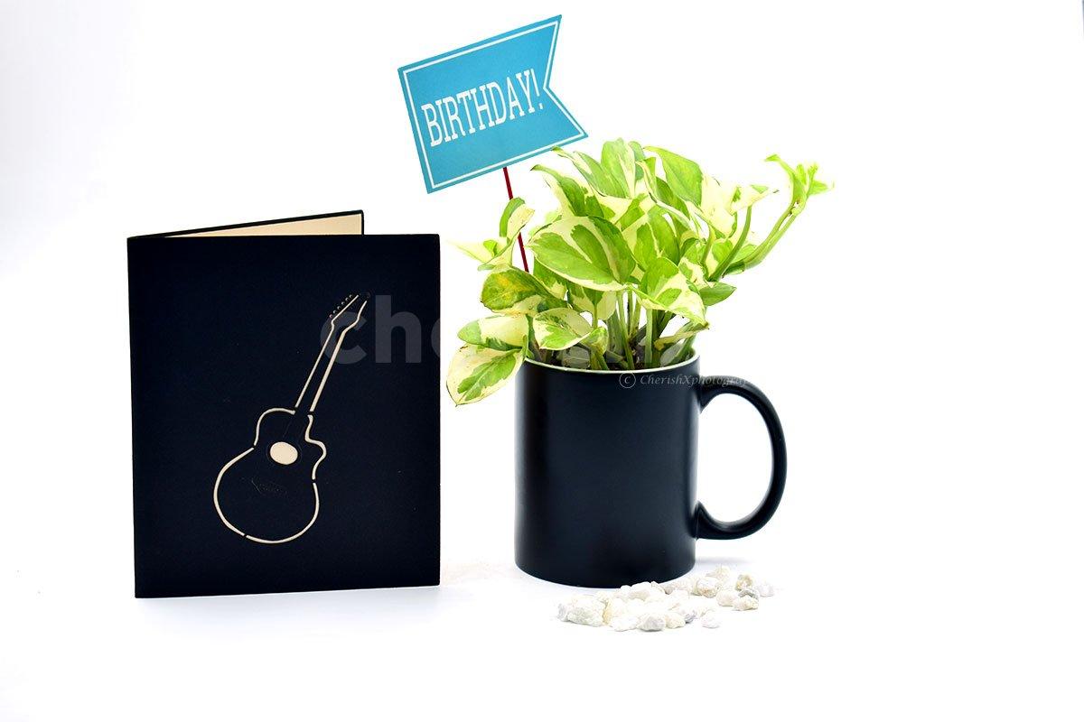 Golden Money Plant In Mug